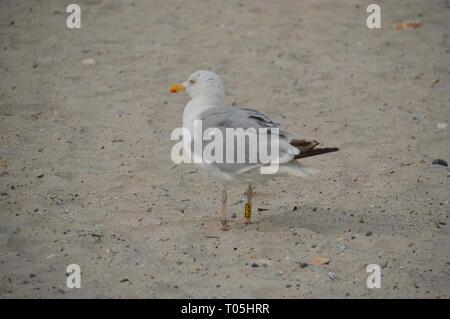 Möwe am Strand auf Helgoland - by Jana Reutin - Stock Photo