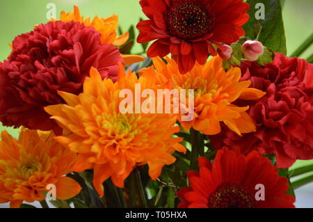 Flowers except one butterfly - Stock Photo