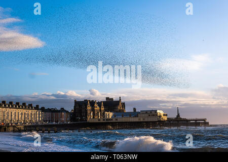 Aberystwyth, UK. 17th Mar, 2019. Tens of thousands of starlings perform their nightly balletic murmurations in the sky above Aberystwyth as the day draws to an end. The migratory birds are coming to the end of their winter sojourn and will soon fly off to return to their breeding grounds in Scandinavia for the summer. Aberystwythis one of the few urban roosts in the country and draws people from all over the UK to witness the spectacular nightly displays between October and March.   Credit: keith morris/Alamy Live News - Stock Photo