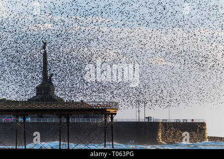 Aberystwyth, UK. 17th Mar, 2019. Tens of thousands of starlings perform their nightly balletic murmurations in the sky around Aberystwyth's distinctive war memorial  as the day draws to an end. The migratory birds are coming to the end of their winter sojourn and will soon fly off to return to their breeding grounds in Scandinavia for the summer. Aberystwythis one of the few urban roosts in the country and draws people from all over the UK to witness the spectacular nightly displays between October and March.   Credit: keith morris/Alamy Live News - Stock Photo