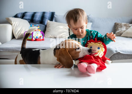 Dog with a cute caucasian baby girl. Beagle dog take and bite doll from cute baby girl in living room. Copy space. - Stock Photo
