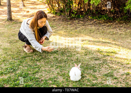 Seoul, South Korea - June 4, 2017: Young korean woman is taking mobile photo of rabbit in the park on Seonyudo island in Seoul. - Stock Photo