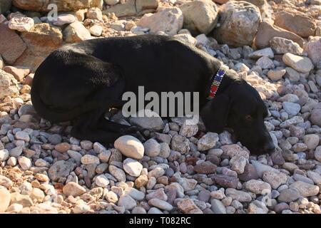 Beautiful black dog sleeping on a pebble beach - Stock Photo