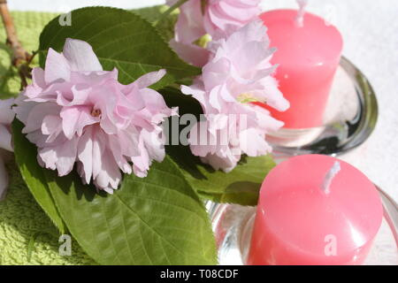 Cherry blossoms with candles - Stock Photo