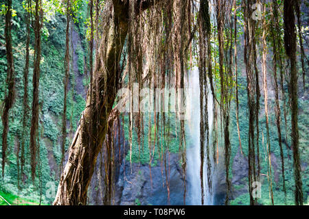 Tree with Aerial Roots in Java Indonesia - Stock Photo