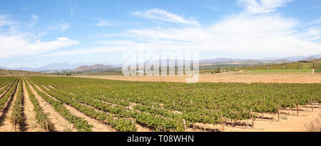 Panorama of  Robertson Wine Valley, Route 62, Breede River Valley, Western Cape, South Africa with a view over vines to the town of Robertson and Lang - Stock Photo