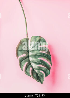 Tropical Monstera leaf on pink background - Stock Photo