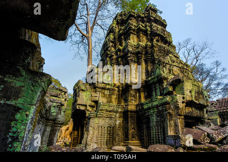Tower within this much visited Unesco listed 12thC Khmer temple complex and Tomb Raider film location. Ta Prohm, Angkor, Siem Reap, Cambodia. - Stock Photo