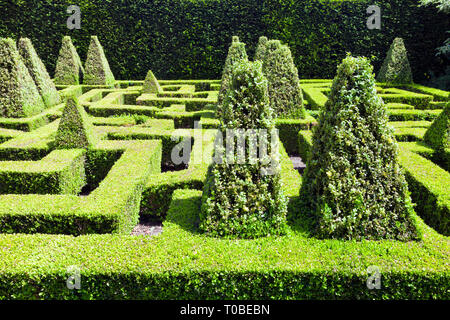 Topiary garden with shrubs trimmed into shapes in maze . - Stock Photo
