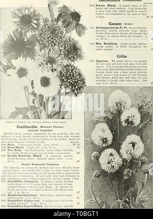 Dreer's garden book 1926 (1926) Dreer's garden book 1926 dreersgardenbook1926henr Year: 1926  88 ZflEigyAJim^ js: RELIABLE FLOWER SEEDS. >HniMEIiPHRl     Geranium (Pelargonium) PER PKT. 2530 Zonale, Mixed. A superb strain of the largest and finest varieties. Very interesting to grow from seed, which should be started indoors and transferred to the open in May or June SO 15 GeUm (Avens) 2541 Atrosanguineum Fl. PI. Beautiful hardy perennial, bearing profusely large, showy double dark-crimson flowers all through the summer; an elegant flower for bouquets. J oz., 50 cts 10 2542 Mrs. Bradshaw. L - Stock Photo