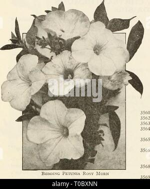 Dreer's garden book 1925 (1925) Dreer's garden book 1925 dreersgardenbook1925henr Year: 1925  58 /flEHRyA-DREEt SPKIALTIES IN FLOWEfv SUM *mMmm    BEAUTIFUL BEDDING PETUNIAS For outdoor decoration, porch, or window boxes, or any position where a mass of color is wanted, we do not know of any plant that equals the Bedding Petunias for effectiveness, and that will give such a wealth of charming color over so long a season. They begin flowering early and continue a sheet of bloom without interruption until killed by frost. The six Bedding sorts offered below were selected for their com- pact grow - Stock Photo