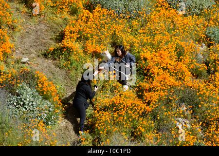 Lake Elsinore, CA / USA - March 9 2019: Two women and a dog trample on fragile Golden Poppies while taking photos at the now-closed Walker Canyon. - Stock Photo