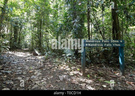 Walking trail to Nandroya Falls in Wooroonooran National Park, Far North Queensland, FNQ, QLD, Australia - Stock Photo