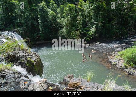 Family swimming at Nandroya Falls in Wooroonooran National Park, Far North Queensland, FNQ, QLD, Australia - Stock Photo