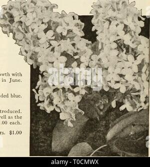 Dreer's garden book 1925 (1925) - Stock Photo
