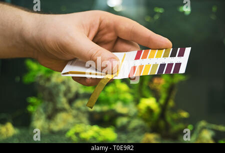 Male hand holding PH tests in front of freshwater aquarium. - Stock Photo