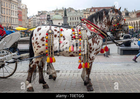 Spotted horses in harness. Spotted Appaloosa horse with carriage riding on city street in Krakow, Poland - Stock Photo