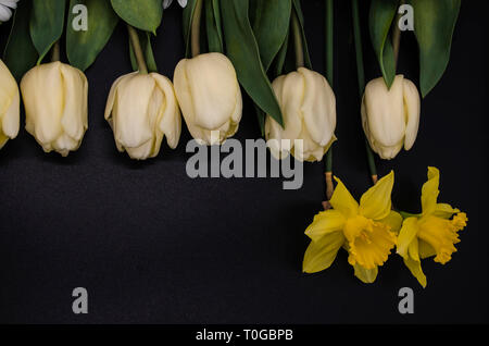 A group of two yellow daffodils, white tulips with large leaves lie on top of a black background. - Stock Photo