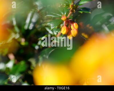 Small orange flower buds - Stock Photo