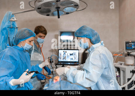 Vet doing the operation for sterilization. The cat on the operating table in a veterinary clinic. Cat in a veterinary surgery , the uterus and ovaries - Stock Photo
