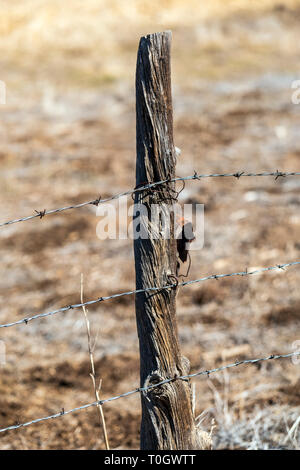 Close-up of barbed wire fence & wooden fence post; ranch in Central Colorado; USA - Stock Photo