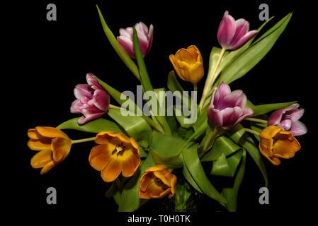 Beautiful bouquet with amazing orange and magenta tulips close-up on black background - Stock Photo
