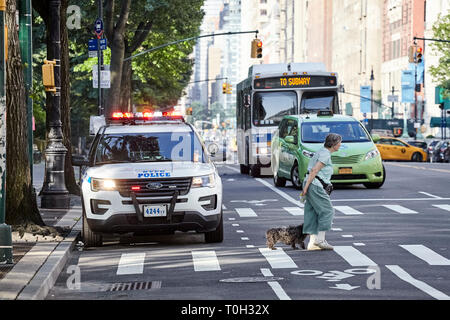 New York, USA - July 01, 2018: Pedestrian with a dog on zebra crossing with NYPD vehicle parked on a street by the Central Park. - Stock Photo