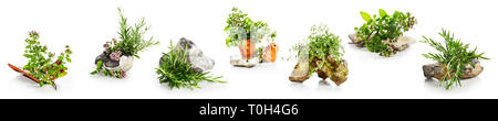 Marjoram, oregano, rosemary herbs with stones and flowerpots collection isolated on white background. Herb garden and healthy eating concept, design e - Stock Photo