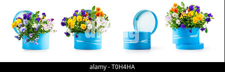 Blue gift box with pansy flowers collection isolated on white background. Spring garden viola tricolor design elements banner as holiday present, east - Stock Photo