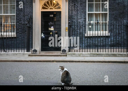 Downing Street, London, UK, 20th Mar 2019. Larry, the Downing Street Cat, remains calm and his usual collected feline self. Palmerston and Larry, often known to have had tense feline relations, appear to keep their peace on a turbulent day of rather un-peaceful political tensions in Westminster. Credit: Imageplotter/Alamy Live News - Stock Photo
