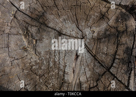 Pine tree trunk wood background, Old weathered gray color wooden stump, closeup view - Stock Photo
