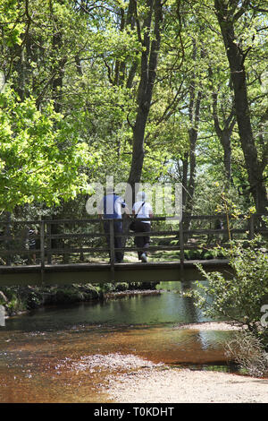 People on footbridge over Ober Water stream in Beech Fagus sylvatica woodland in spring Rhinefield Walk New Forest National Park England UK - Stock Photo