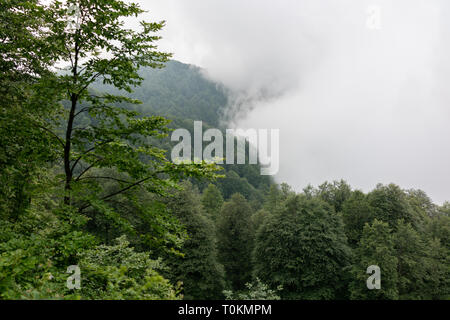 Thick clouds and fog in the mountains approach the edge of the forest. High humidity - Stock Photo