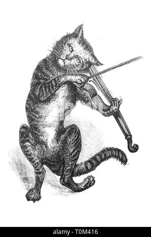 Cat playing the violin - Vintage Engraved Illustration, 1894 - Stock Photo