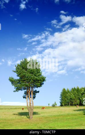 Landscape, tree on green field, the blue sky and white clouds in the background - Stock Photo