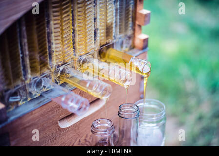 Raw Honey collects into jars from a Flow Hive Honey Super. - Stock Photo