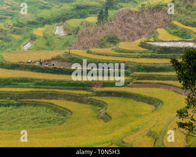 Rice Terraces, Yuanyang, Yunnan Province, China - Stock Photo