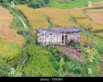 view between bamboo trees on a small farmhouse surrounded by rice paddies, Yunnan, China. - Stock Photo