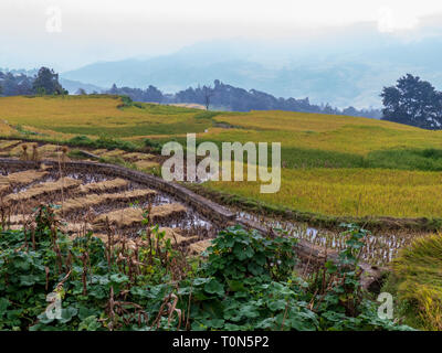 Rice terraces in Yunnan Province, China - Stock Photo