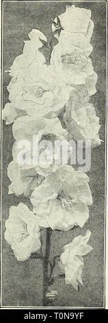 Dreer's 1908 autumn catalogue (1908) Dreer's 1908 autumn catalogue  dreers1908autumn1908henr Year: 1908  BoLTONiA Latisquama.    CALimHRIS (Star Wort) Incisa. An attractive plant for the border July to September daisy-like pale lavende grows 12 to 18 inches high, producing from flowers with vellow centre. CAL,L,IRIIOK (Poppy Mallow). Involucrata. An elegant trailing plant, with large saucer-shaped flowers of bright rosy- crimson, with white centres, which are produced all summer and fall. Linearlloba. Delicate light rose-colored flowers all summer. CAMPANULA (Bell Flower). Alllariaefolia. Grow