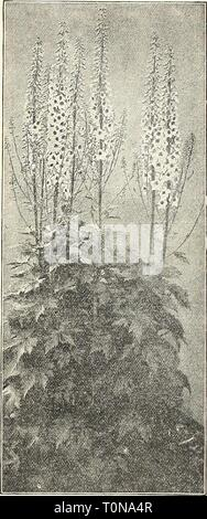 Dreer's 1908 autumn catalogue (1908) - Stock Photo