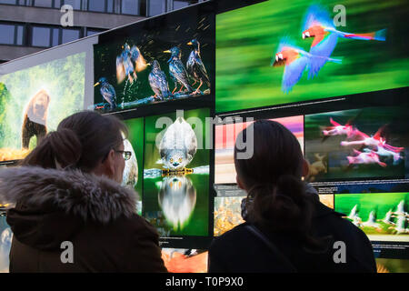 Budapest, Hungary. 20th Mar, 2019. Open air exhibition of world famous Hungarian nature photographer Bence Mate is seen on a public square in downtown Budapest, Hungary, on March 20, 2019. Credit: Attila Volgyi/Xinhua/Alamy Live News - Stock Photo