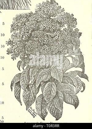 Dreer's garden book  1904 Dreer's garden book : 1904  dreersgardenbook1904henr Year: 1904  Lemoine's Giant Heliotrope, Collections of Everlasting Flowers and other special collections of Flower Seeds are offered on page 56.