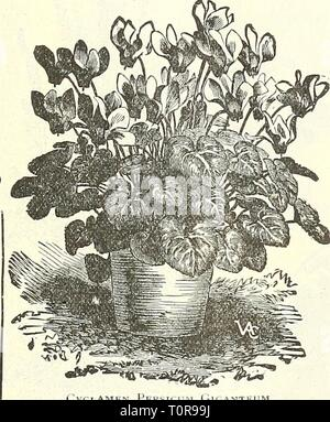 Dreer's garden book  1904 Dreer's garden book : 1904  dreersgardenbook1904henr Year: 1904  10 SPECIAL COLLECTIONS ...of... FLOWER SEEDS. For the convenience of those who are not familiar with the best summer-flowering annuals, quick-growing climbfers, etc., etc., we offer collections of the best. See page 56. .jsXl    Mammoth Perfection Cosmos. 15 25 25 25 25 oO'