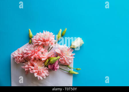 Pink chrysanthemum flowers and ranunculus flowers, gift or present, envelope on blue background. Mothers Day, Birthday, Valentines Day, Womens Day - Stock Photo