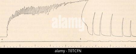 """Elektrophysiologie (1895) Elektrophysiologie  elektrophysiolog00bied Year: 1895  534 Die Nerven und ihre physiologische Function. Erregbarkeitsveränderungen der übertragenden Elemente der grauen Substanz des Lendenmarkes handelt, so waren analoge Erscheinungen der """"Bahnung' auch in dem Falle zu erwarten, wenn der modi- ücirende und der Prüfungsreiz nacheinander an den beiden verschie- denen Polen des Reflexcentrums einwirken, so dass im einen Falle die directe Erregbarkeit der motorischen Rückenmarksfasern infolge eines vorhergehenden, durch Reizung des centralen Ischiadicusstumpfes ausgelöste - Stock Photo"""