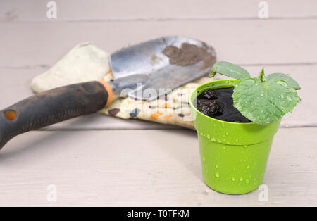 Small Cucumber Plant with Gardening Tools on a Deck - Stock Photo