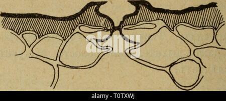 Eesti Looduseuurijate Seltsi aastaraamat (1976) - Stock Photo