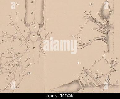 Dr H G Bronn's Klassen Dr. H. G. Bronn's Klassen und Ordnungen der Amphibien wissenschaftlich dargestellt in Wort und Bild  drhgbronnsklasse00hoff Year: 1873 - Stock Photo