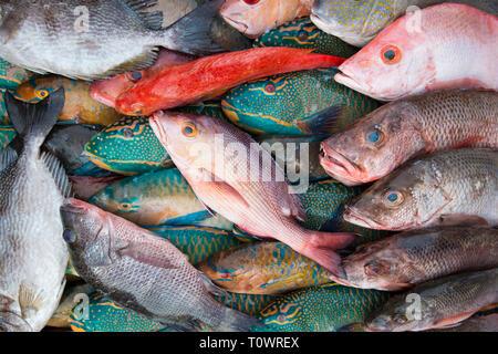 Beautiful red, orange and blue fish, for sale at the fresh seafood market in Kota Kinabalu, Sabah, Borneo, Malaysia. - Stock Photo